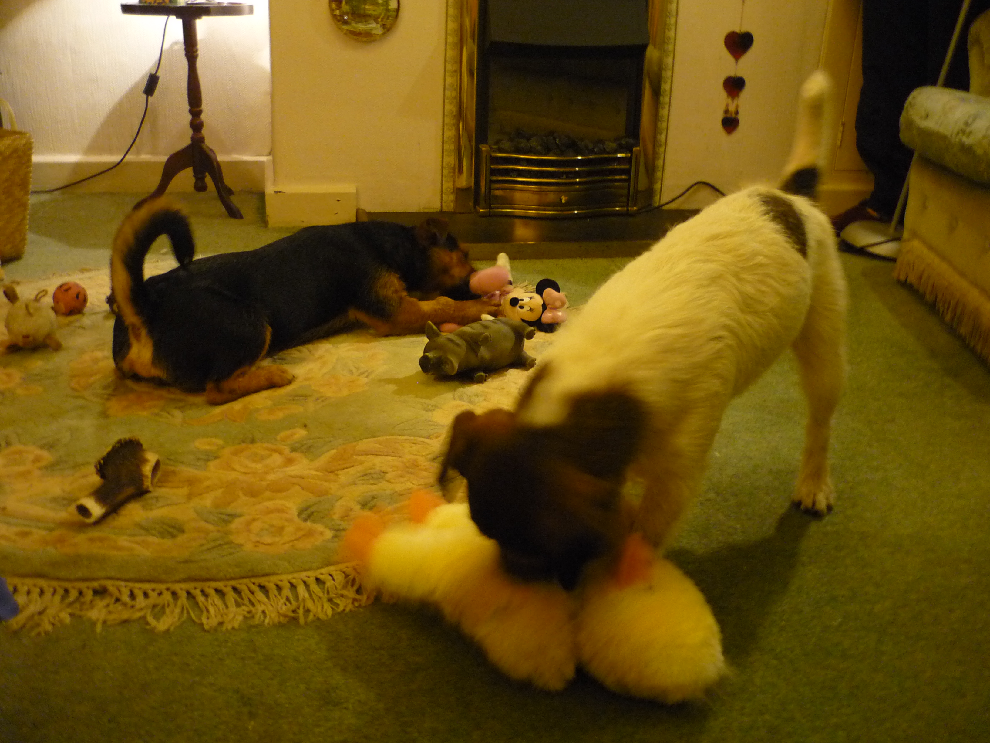 dog sitters in Cornwall